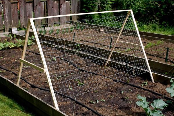 Этот прием позволит выращивать больше огурцов на грядке