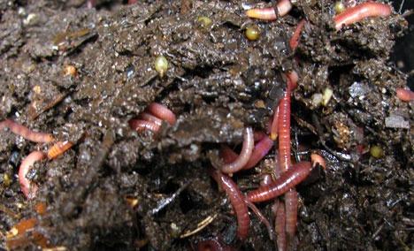 Органическое земледелие, пермакультура: микрофлора почвы