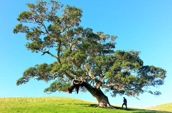 Деревьям в Мельбурне завели электронную почту