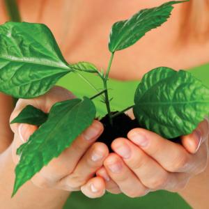 Весна – как помочь растениям проснуться?