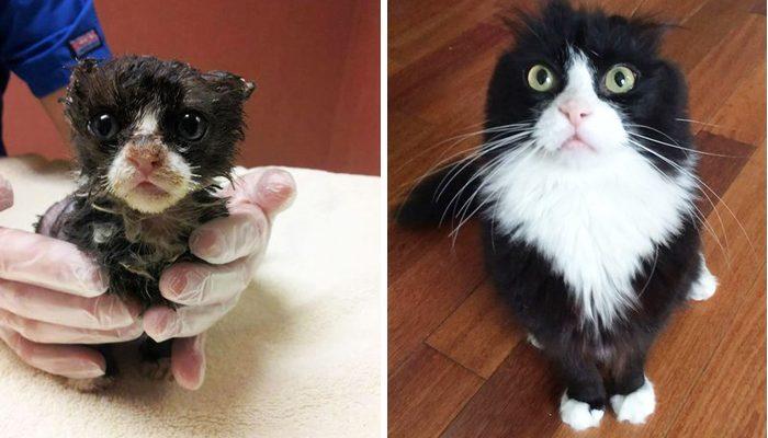Выжившие кошки, которых спасли и полюбили: до и после