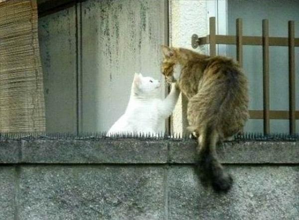 К любви через все преграды
