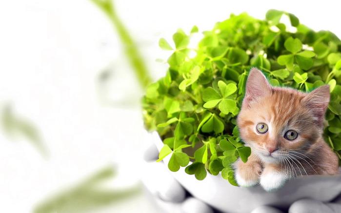 Как определить своё счастливое растение и вырастить удачу?