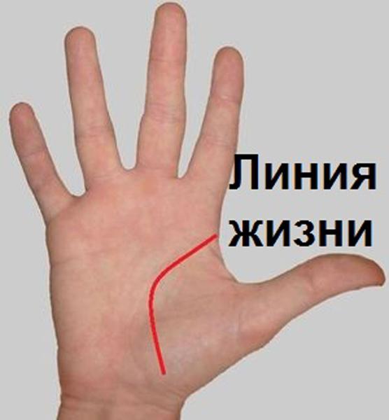 Как по линиям на руке узнать, что ждет вас в будущем и какой вы человек