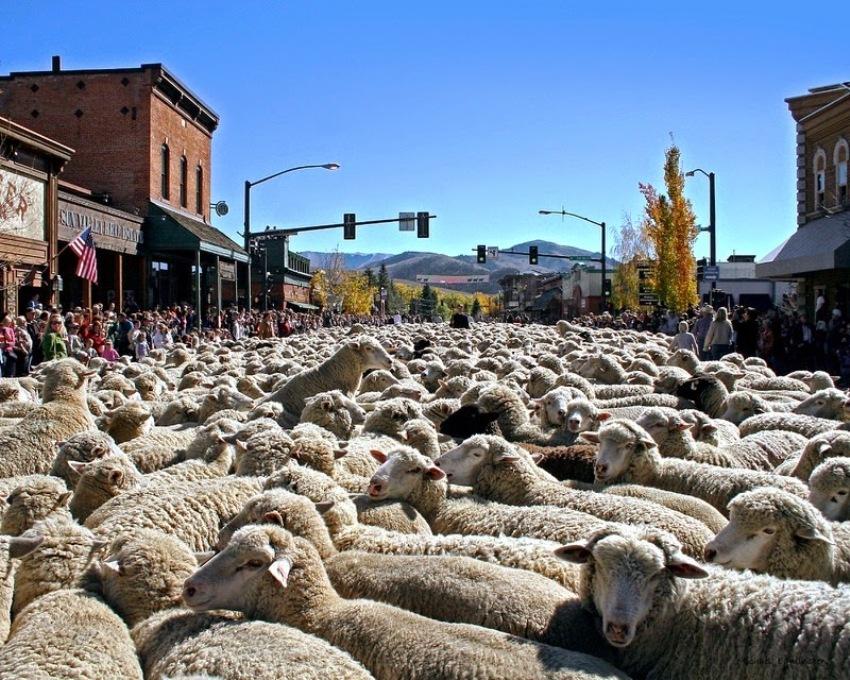 Праздник Трейлинг овец в Айдахо