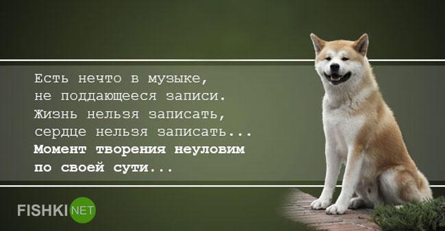 """Запоминающиеся цитаты из фильма """"Хатико: Самый верный друг"""" животные, история, хатико, цитаты"""