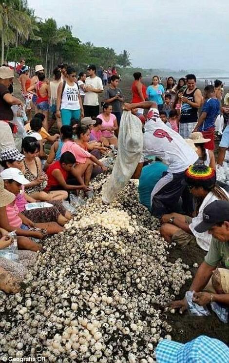 В Коста-Рике люди помешали черепахам отложить яйца животные, экология