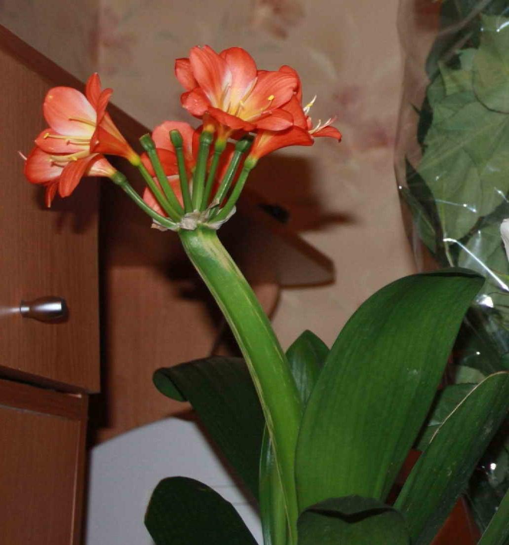 Цветы комнатные названия и фото р