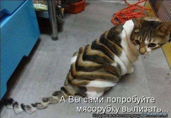 Юморная котоматрица 8