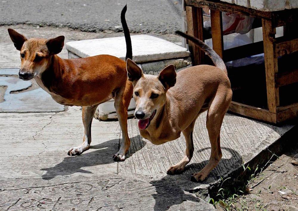 23. Собаки, родившиеся без передних лап, но всё равно не теряющие волю к жизни. люди, мир, удивительные фотографии