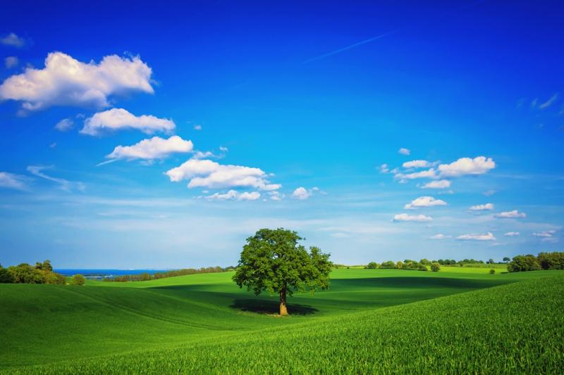 Дерево  басня, крылов