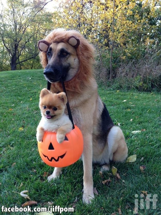 happydog 2 Самая счастливая собака на свете