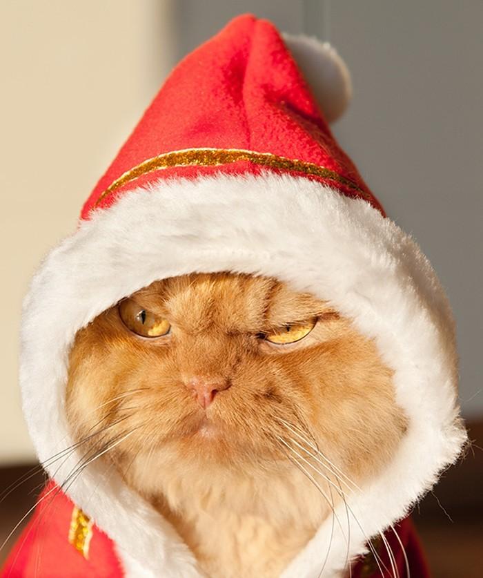 Garfi10 Гарфи, самый сердитый кот в мире