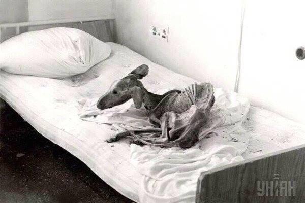 Скелет собаки в одной из квартир Припяти: она так и не дождалась возвращения своих хозяев. Животных вывозить было запрещено.