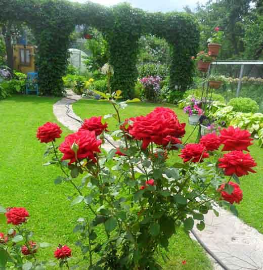 Сад на небольшом участке