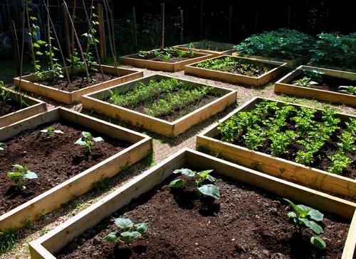 Декоративный огород как сделать