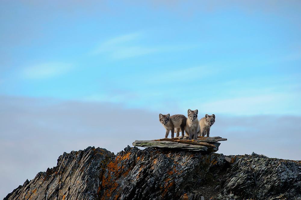 Wrangel-island_1142