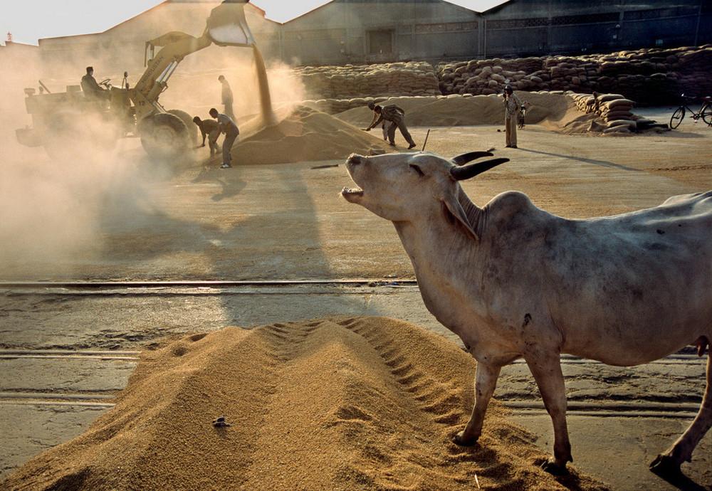 Изумляющая Индия в объективе легендарного Рагху Рая 46