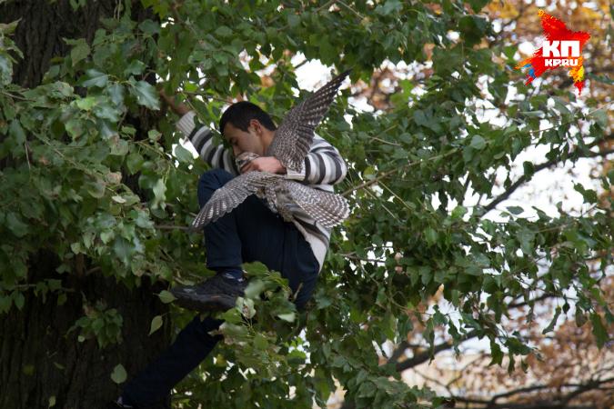 Сокола, удравшего из Ленинградского зоопарка, спас прохожий