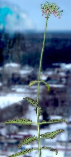 Разгадка цветка-загадки