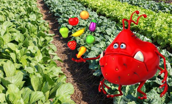 От каких жуков в огороде обя…