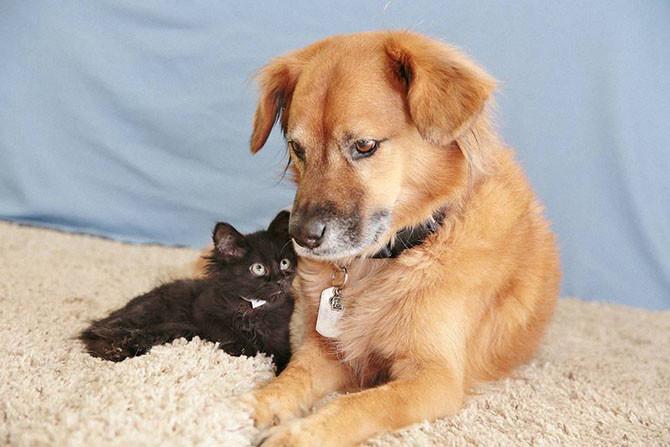 Пёс Бутс, который работает кошачьей няней Пёс Бутс, коты, нянька, няня, приют