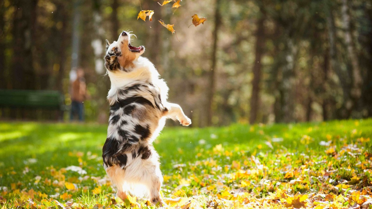 Это осень!