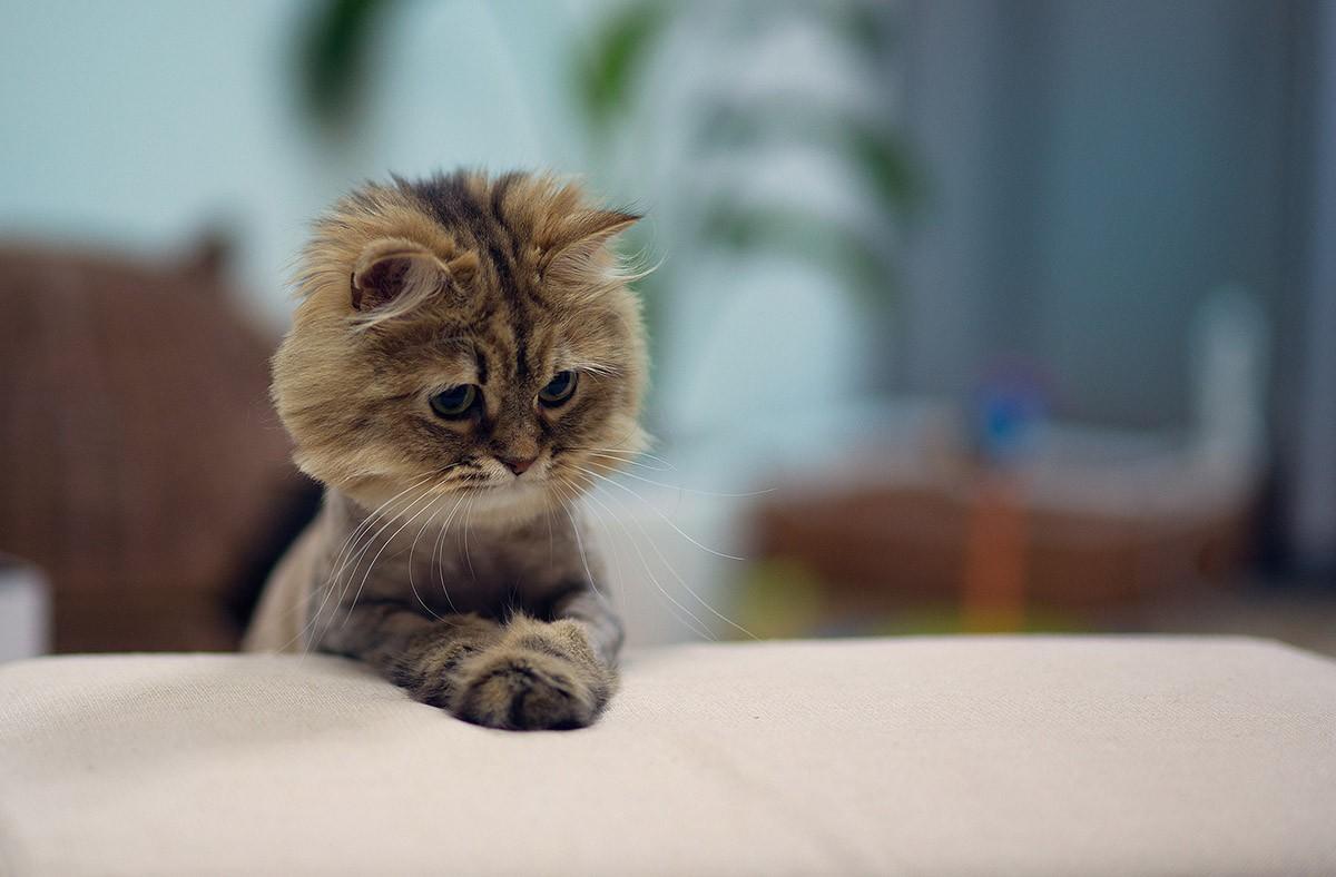 lolcats36 100 лучших фотографий кошек всех времен и народов