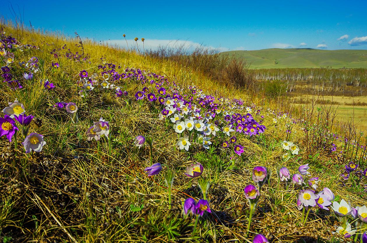 В Хакасии обнаружен рай