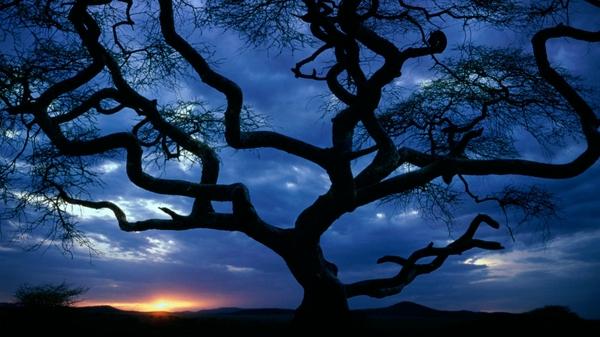 Деревья и природа - daver - Photo.Qip.ru / id: vas