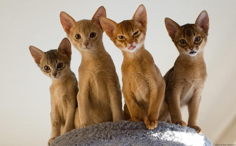 Эти необычные коты…
