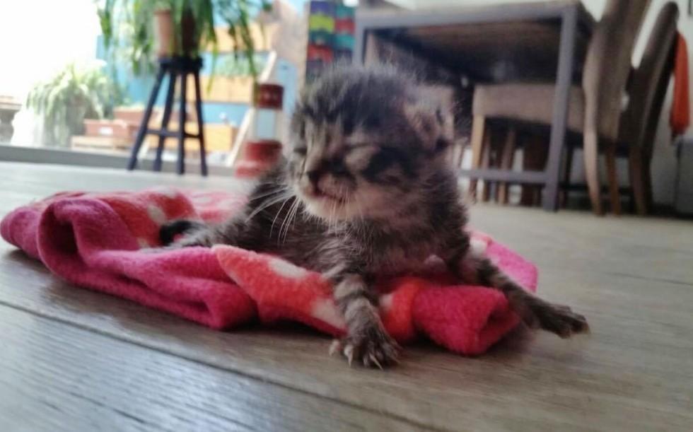 Кошка любила и хранила малыша