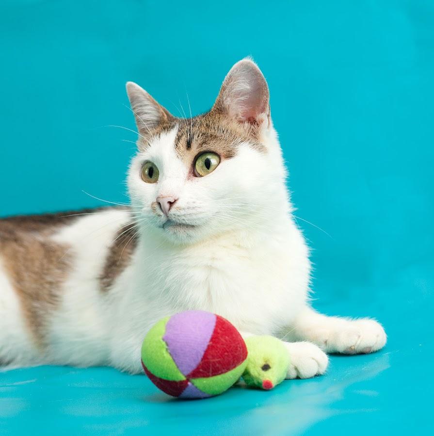 Кошка ищет дом в Москве