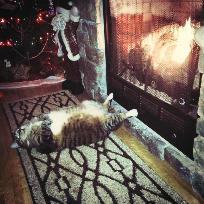 sleepingcats21 Коты, познавшие науку сна