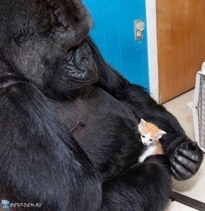 Самые невероятные приемные родители среди животных (4)