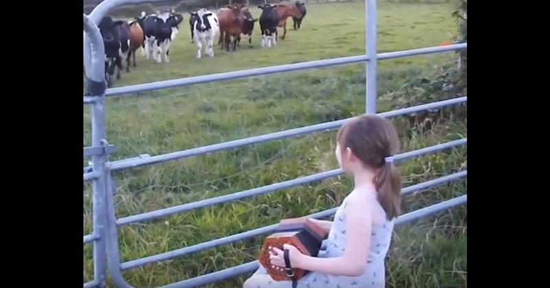 Маленькая девочка заиграла на гармошке перед коровами. Реакция животных поразит вас!
