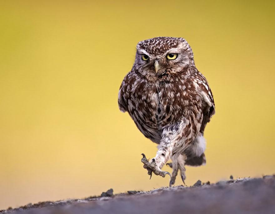 20 фотографий, которыми совы…
