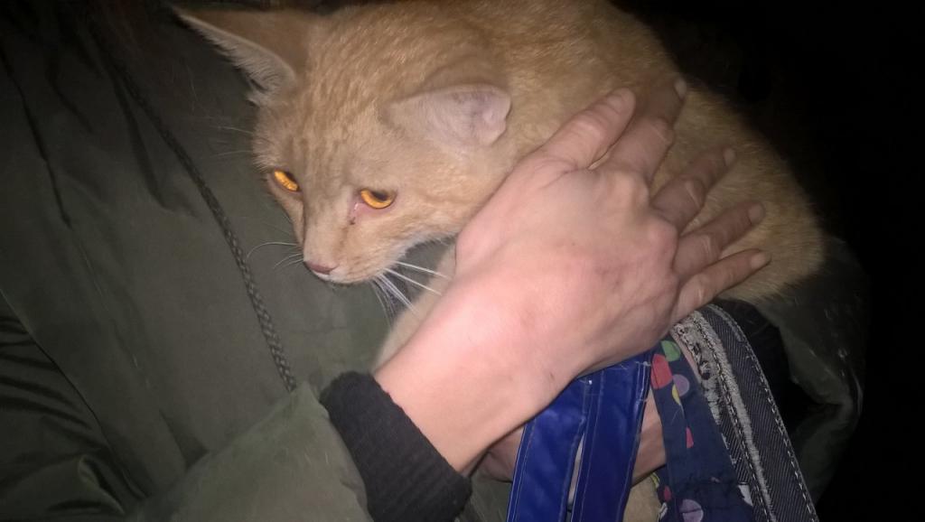 «Мы бросали ему еду, но вытащить не могли!» В Чебоксарах кот неделю провёл в вентиляционной шахте многоэтажки