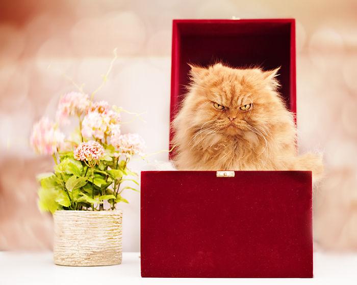 Garfi13 Гарфи, самый сердитый кот в мире