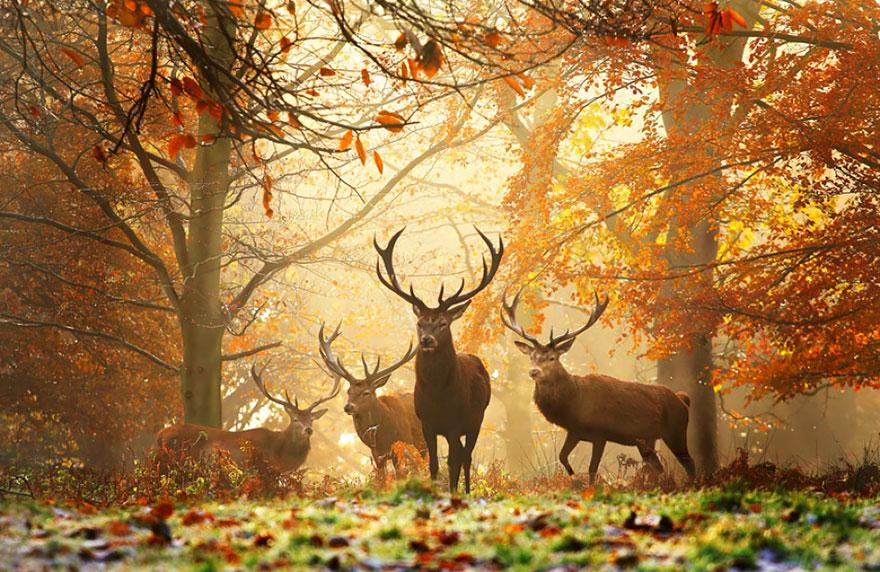priroda-osen-zhivotnye 6