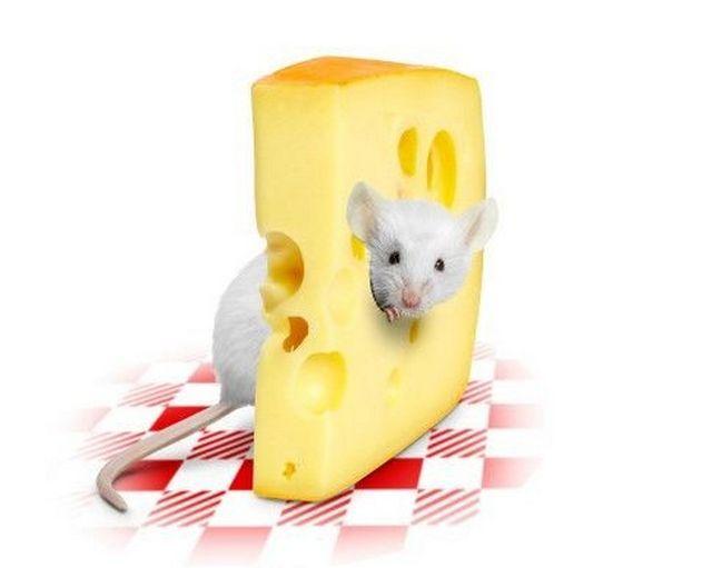 Швейцарцы не дураки, что в сыр дырки кладут...)