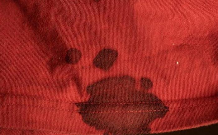 Отмыть пятно крови застарелые фото