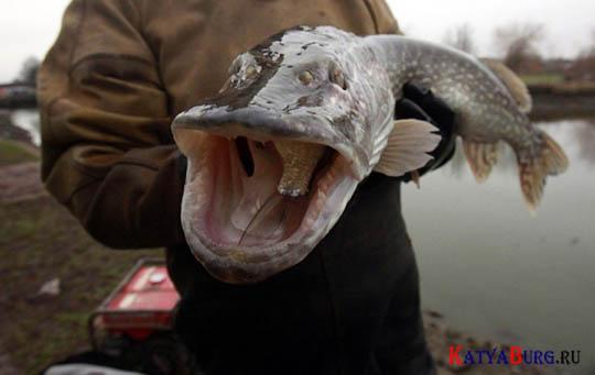 рыбалка в локсе