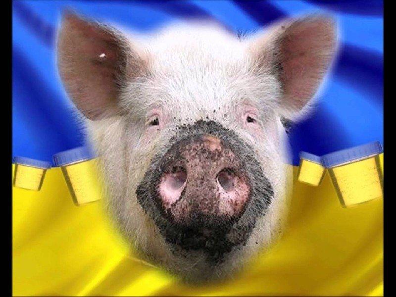 Прозрение украинского патрио…