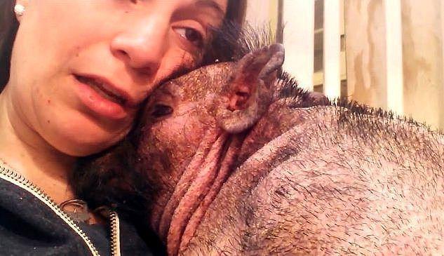 Хрюша всё понимает: вы до сих пор думаете, что свиньи это бесчувственные животные?