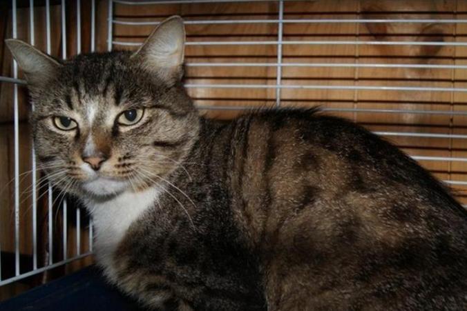 Уральский кот прошел 50 километров, чтобы вернуться домой...но оказался не нужен хозяевам
