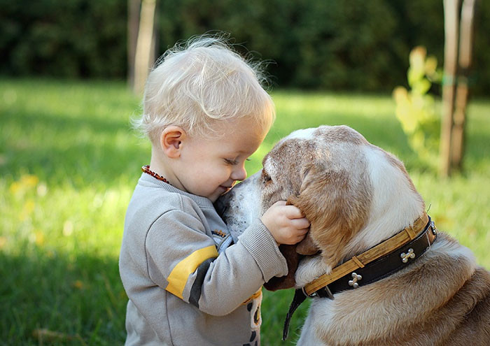 Друзья дружба, ребенок, собака
