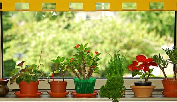 Как украсить свой подоконник цветами