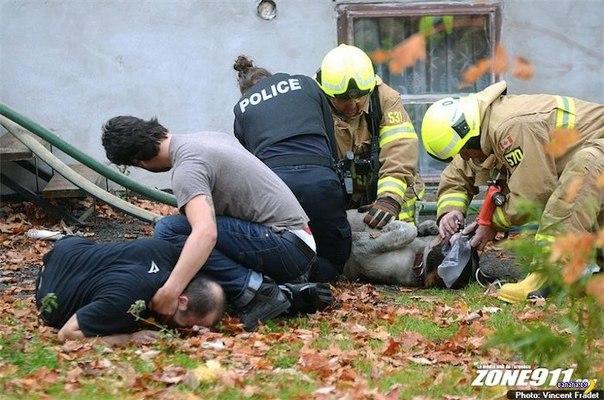 Убитый горем хозяин пса, которого так и не смогли спасти во время пожара....