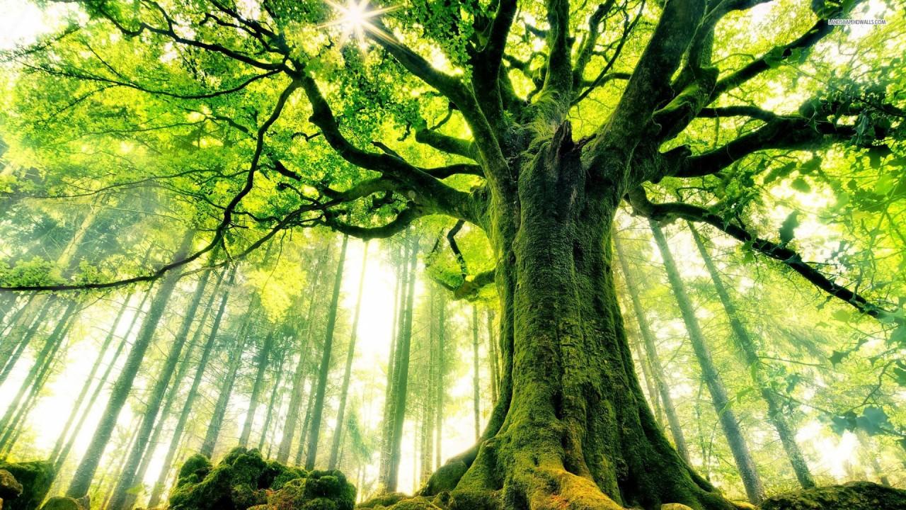В мире гигантов: растения деревья, планета земля, природа, растения